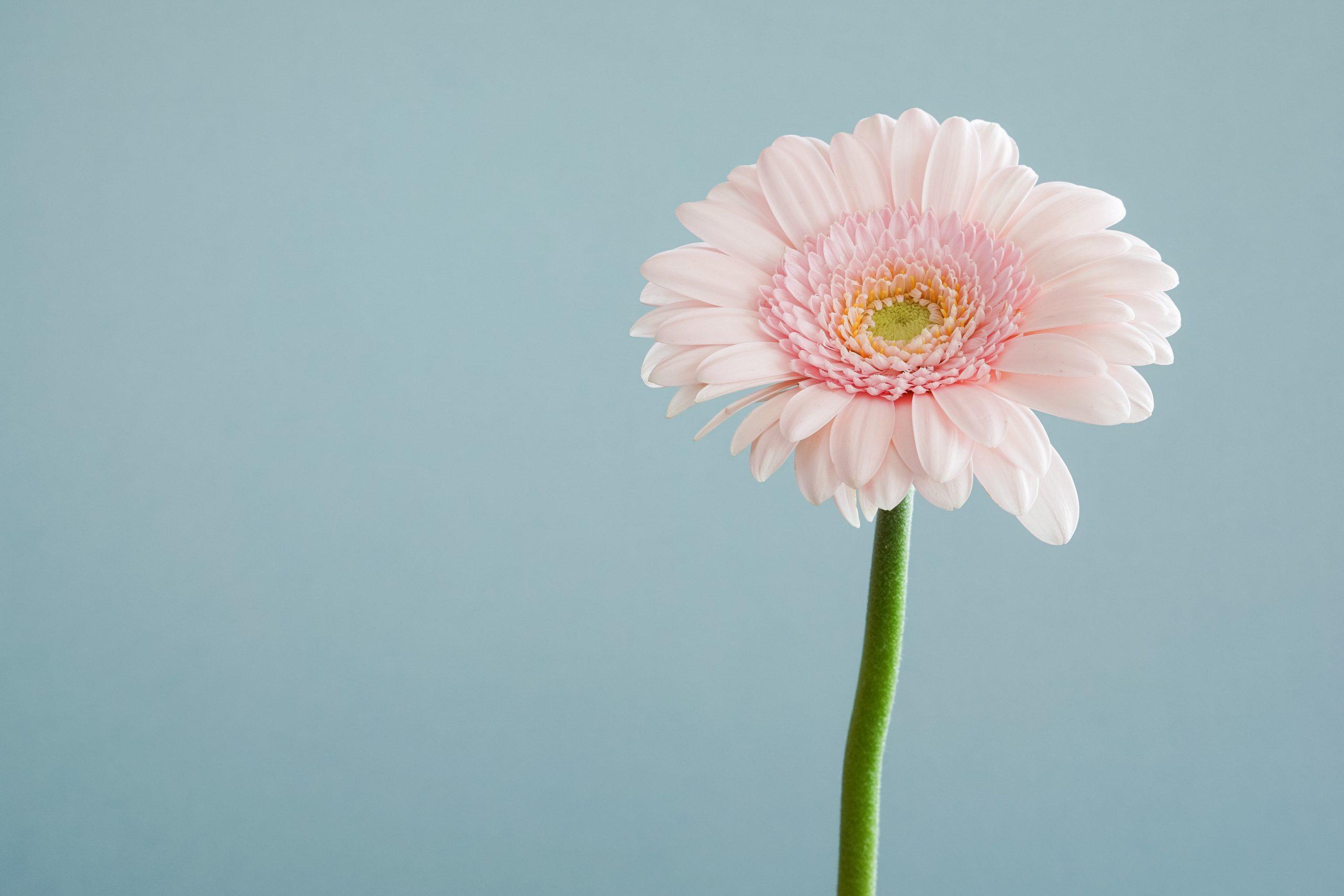 Hold dig fra en blomsterhandler ved allergi!