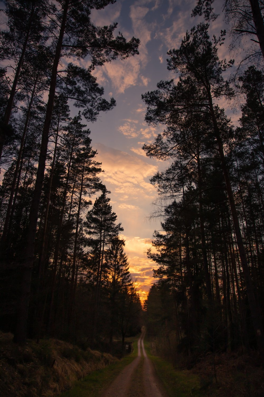 Skoventreprise: Sådan får du hjælp til større skovarealer