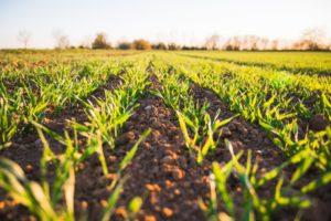 Sådan finder du landbrugsel i Sønder Omme